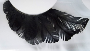 feathers The Best False Lashes for Halloween